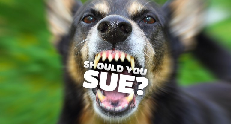 Should you sue for a dog bite?